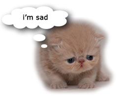 sad_kitten1